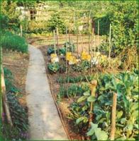 βιολογική καλλιέργεια